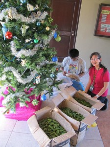 Food Bank Philippines Delivered Fresh Okra to Tuloy Foundation